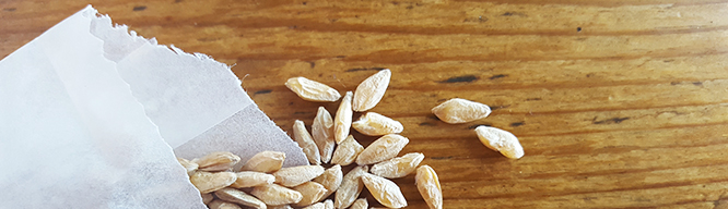 Heart and Grain: Farmers are matchmakers between land and seed