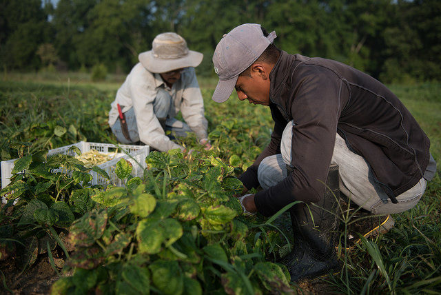 Farmworkers are farmers too.