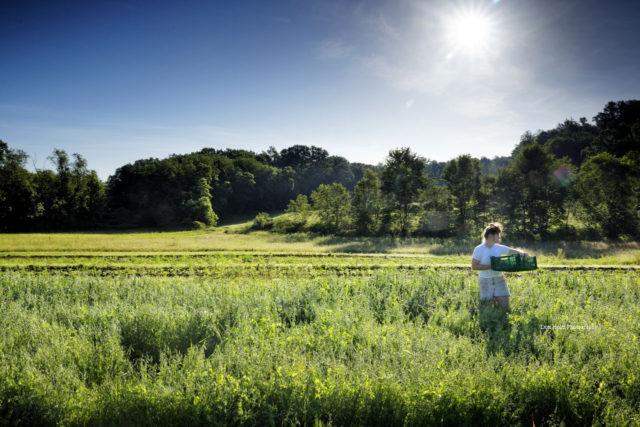 Farm bill expires, stranding young farmers