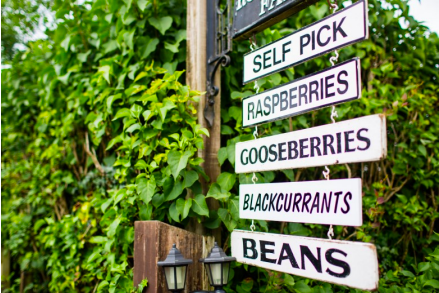 Produce Safety Best Practices for Farm Stands and U-Pick Operations