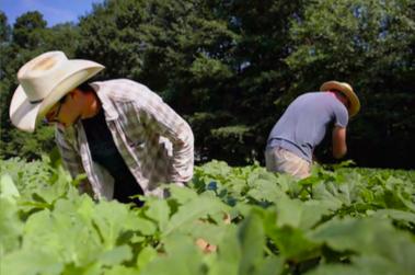 Produce Safety Case Study: Love is Love Farm
