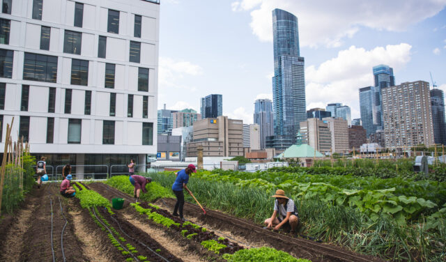 USDA Launches Inaugural Urban Agriculture Grants Program