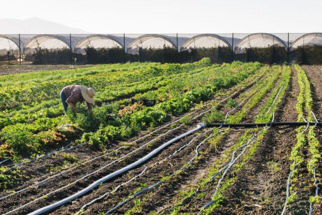 Encuesta de asistencia técnica agrícola // Farm Technical Assistance Survey